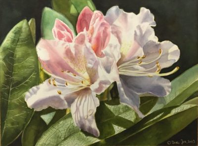 Rhododendron flower painting in watercolor