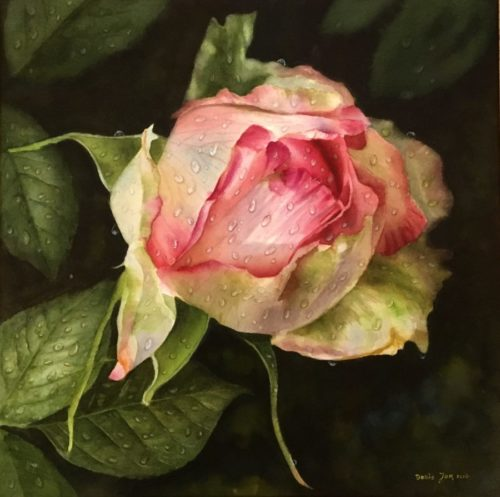 rose painting in watercolor with raindrops rose honore de balzac fineart