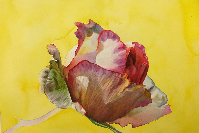 adding a yellow underwash to create dark backgrounds on rose paintings by Doris Joa