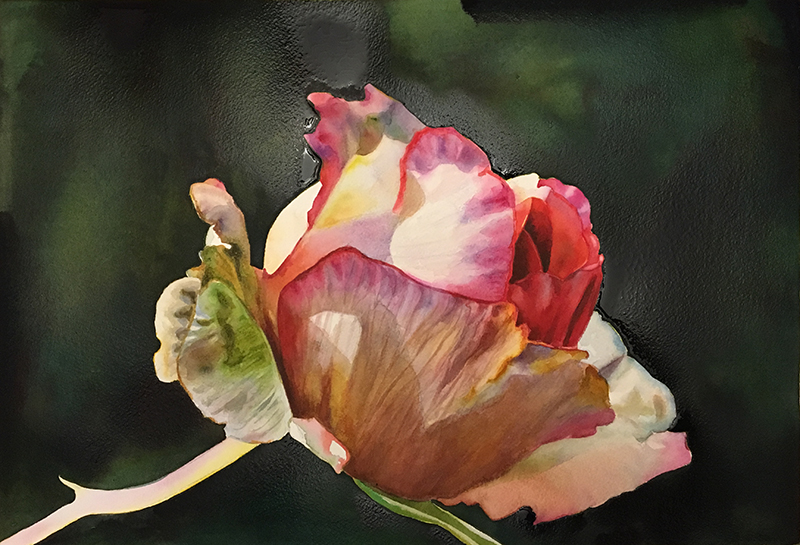 How to create a beautiful dark background in watercolor - free watercolor lesson