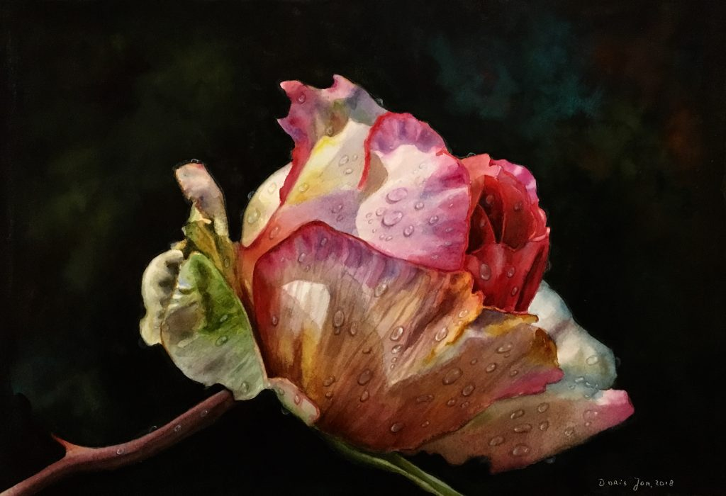 Pink Rose Bud with raindrops in watercolor by Doris Joa